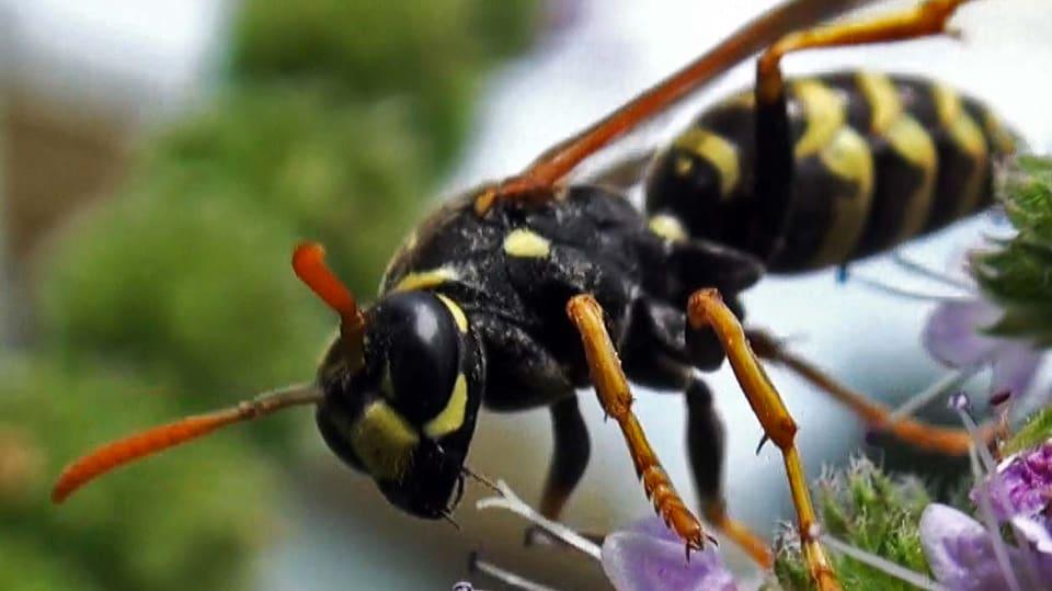Spinnen, Igel und exotische Blumen: