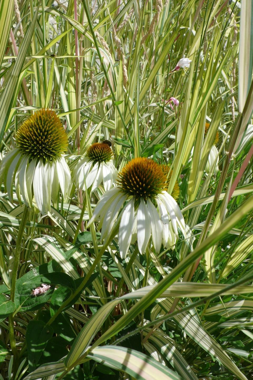 drei Blumen in Gräsern