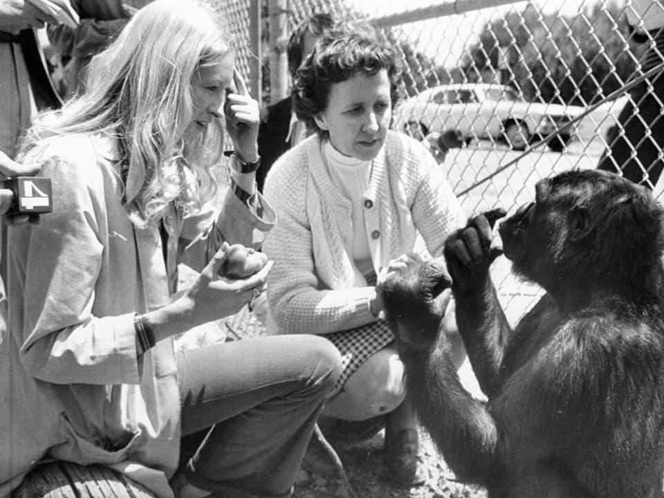 Die Gorilladame, die mit Menschen spricht