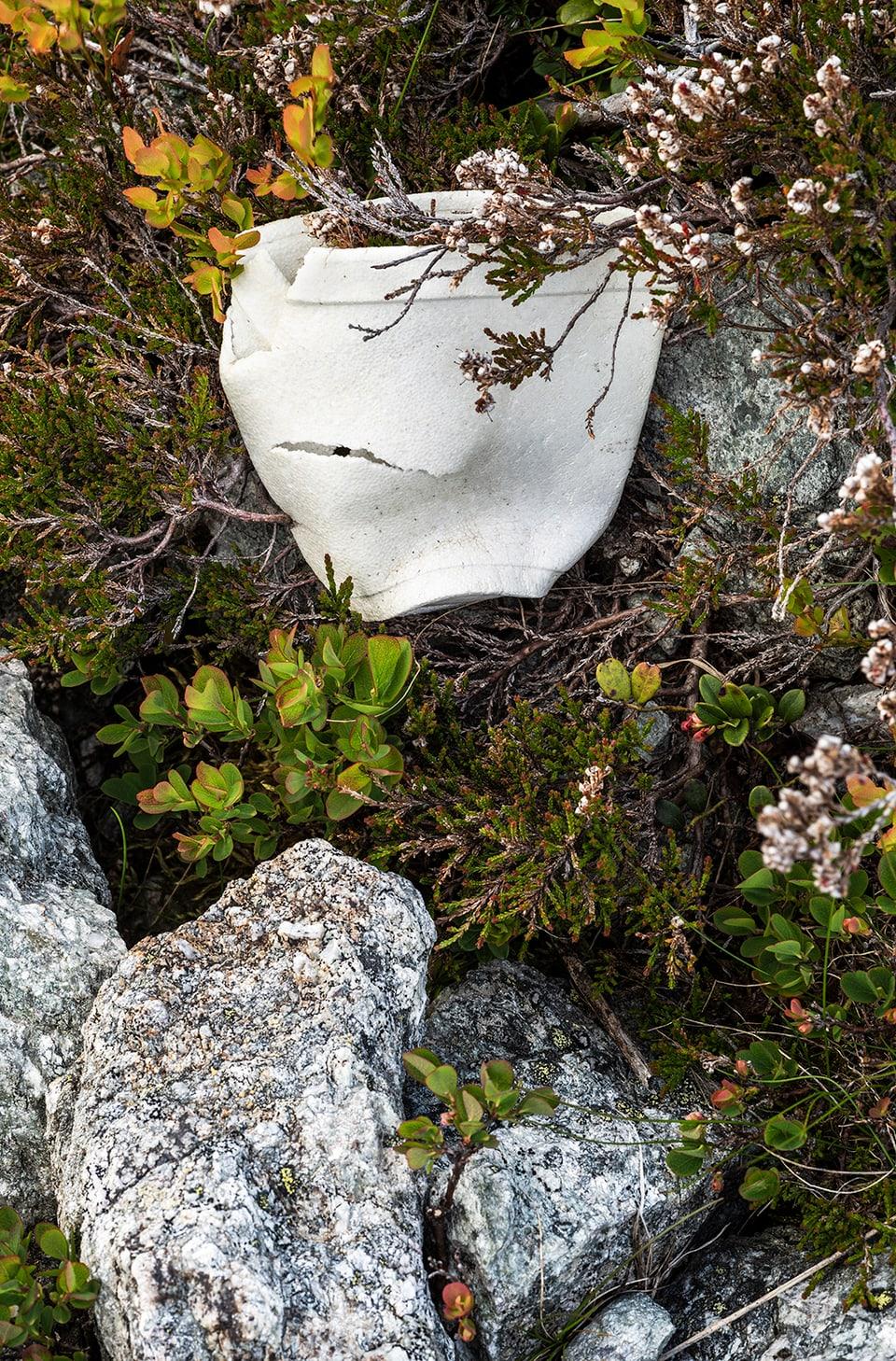 Bild von Plastikbecher zwischen Steinen und Gestrüpp.