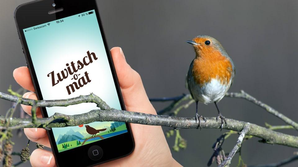 Digital Zwitsch O Mat Mit Dem Smartphone Vogel Erkennen Radio