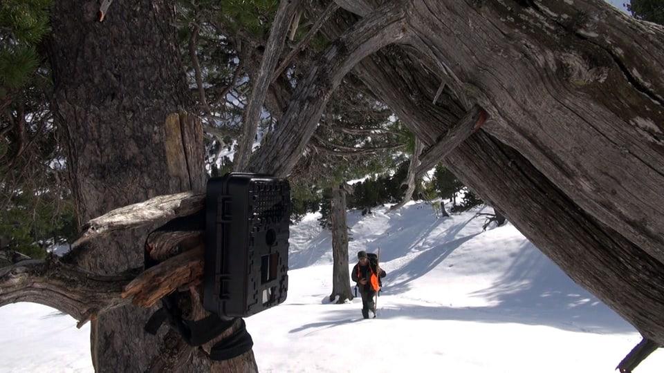 Kamera hängt an einem Ast, Filmemacher stapft im Hintergrund herbei)