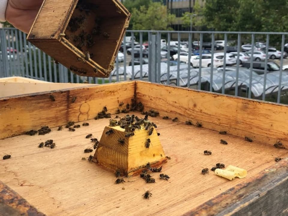 Der Futtertrog der Bienen