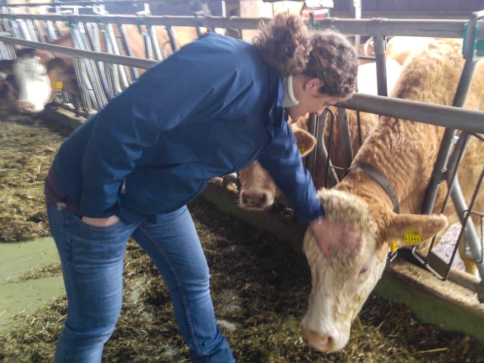 Auch Yvonne Koller aus Grossdietwil hat Kühe - Mutterkühe.
