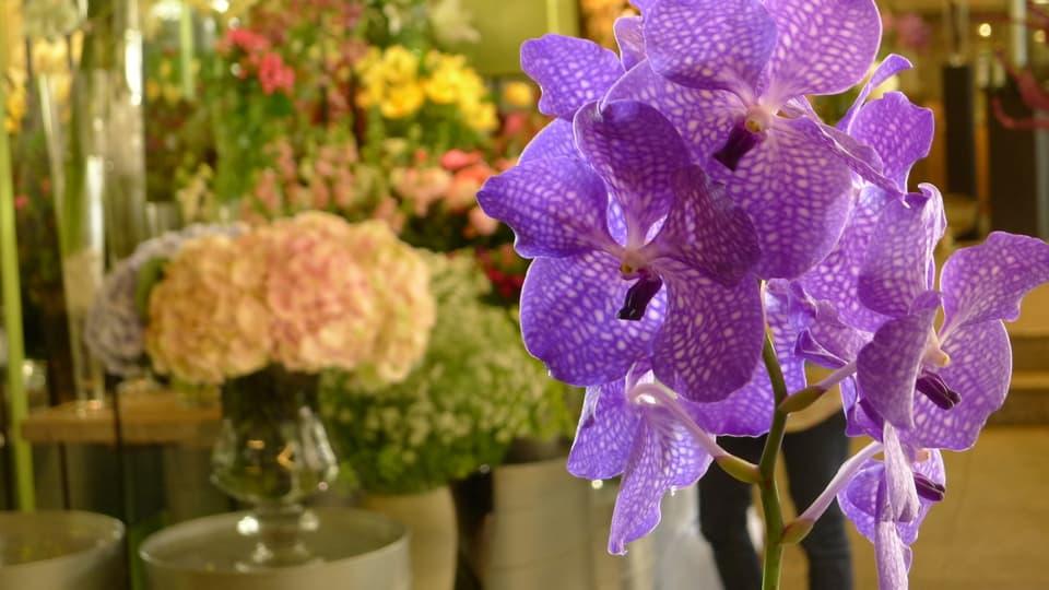 Im Vordergrund leuchtet die violettfarbene Orchidee Vanda, im HIntergrund sind Blumen in verschiedenen Gelb- und Orange-Tönen zu sehen.
