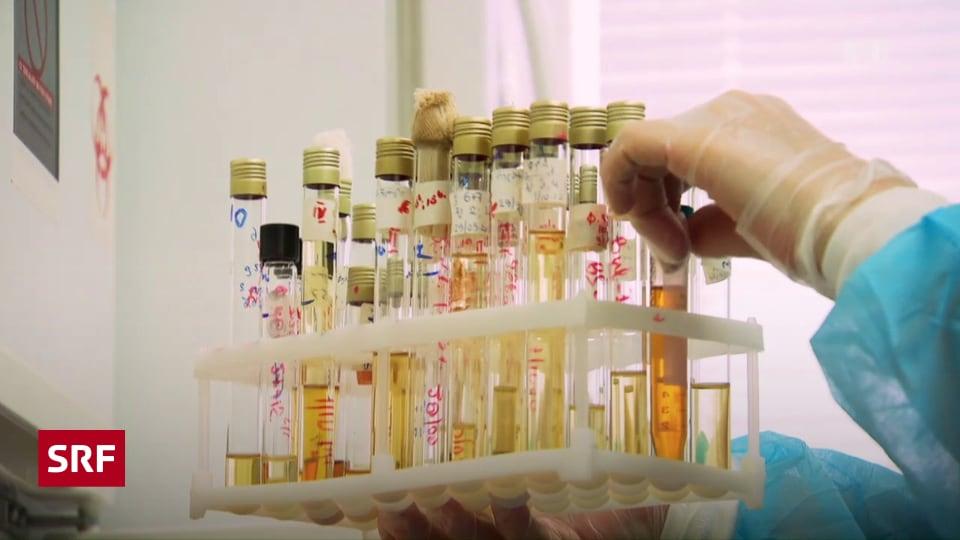 Phagentherapie Schweiz