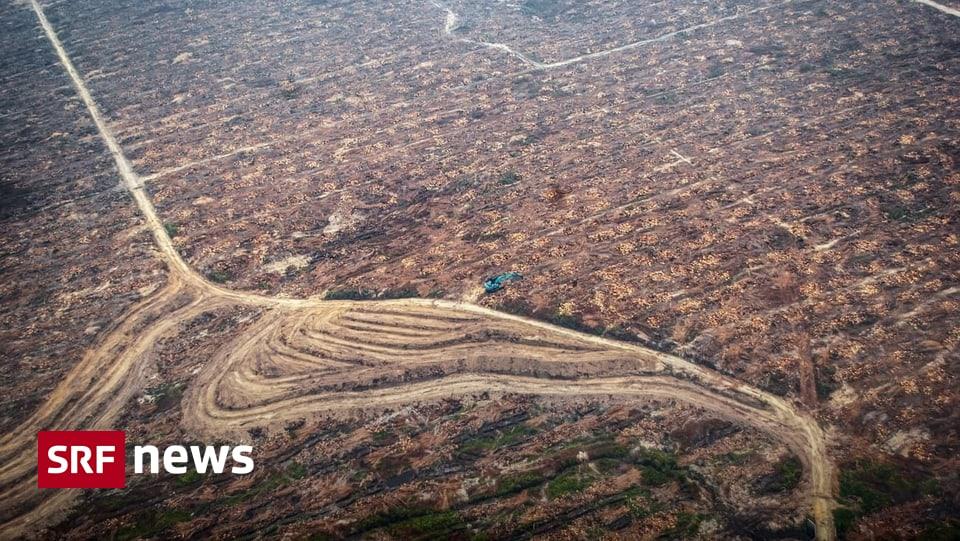 Umstrittenes Palmöl - Volk soll über Freihandelsabkommen mit Indonesien abstimmen