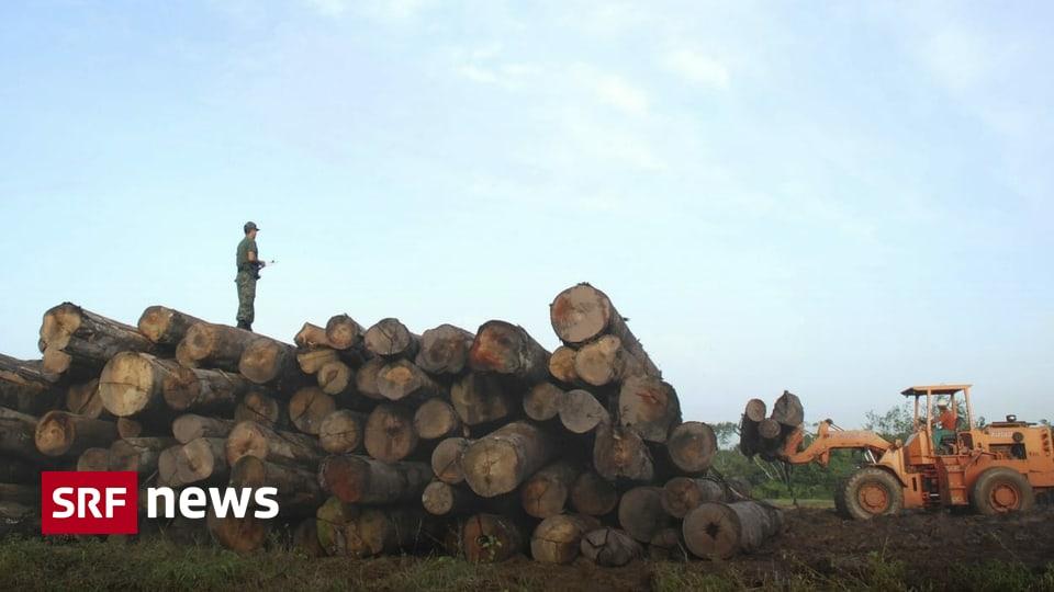 Aktion «Adoptiere einen Park» - 8 Franken pro Hektar: Brasilien verdient an Waldpatenschaften