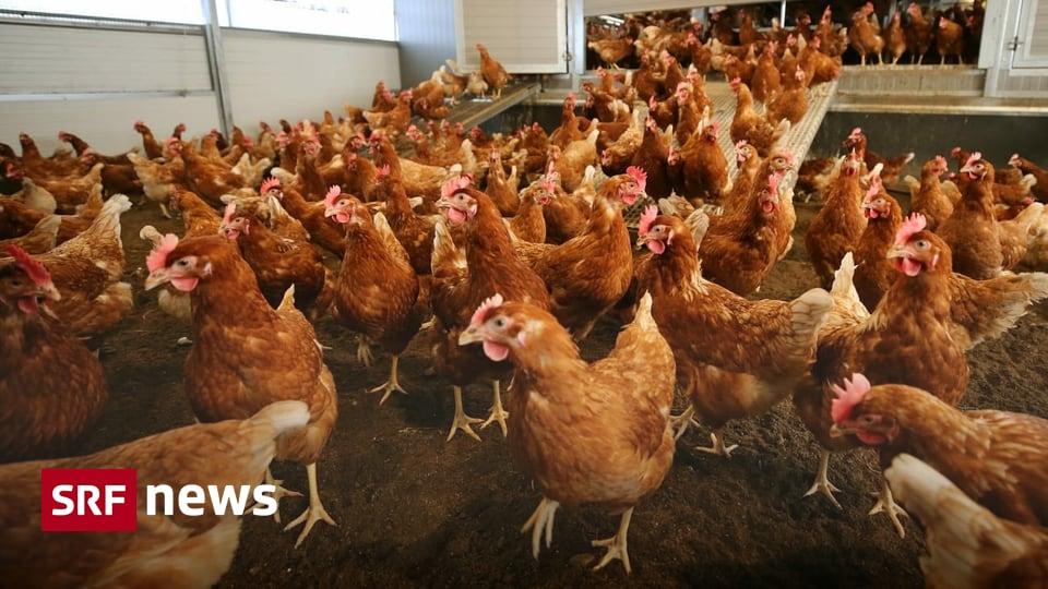 Nach Polen und Ungarn - Vogelgrippe-Fall auch in Tschechien