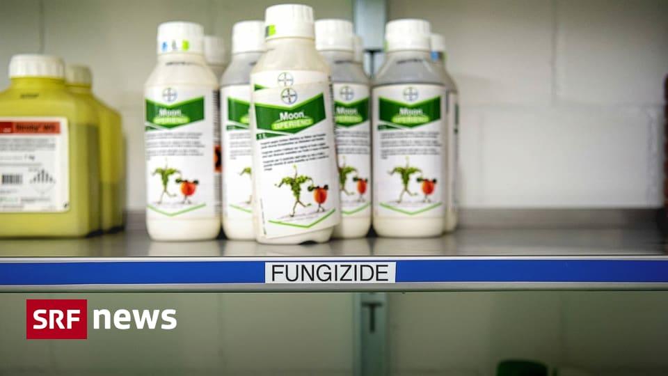 Chlorothalonil verboten – Krebserregendes Pflanzenschutzmittel verliert seine Zulassung