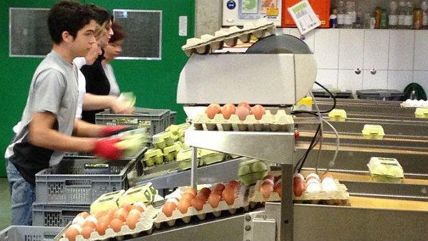 Bis zu 200'000 Eier rollen jeden Tag über die Fliessbänder der Firma Hosberg in Rüti ZH.
