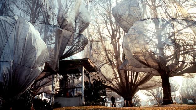 178 verhüllte Bäume im Garten der Fondation Beyeler in Basel