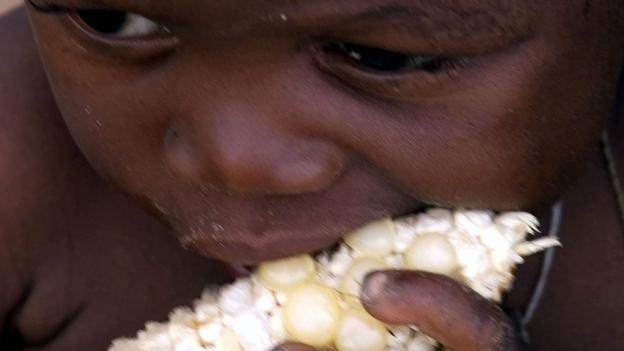 Kann Gentech helfen, den Hunger zu bekämpfen?