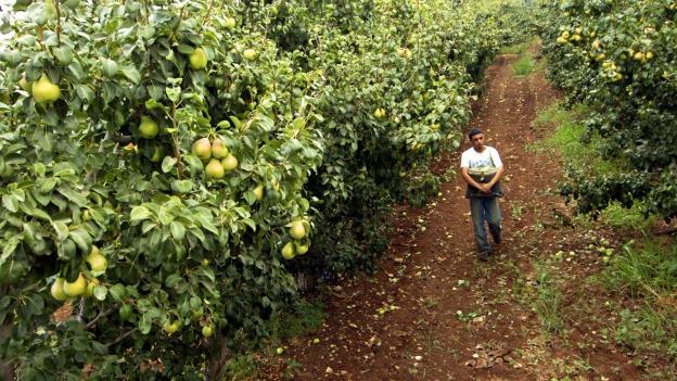 In «Le goût des merveilles» kämpfen die Protagonisten um ihre Birnenplantage.
