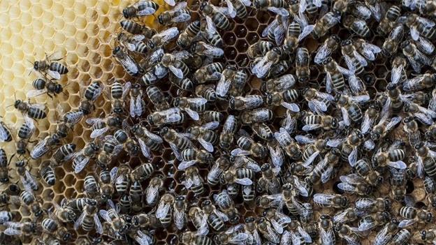 Bienen machen Honig - aber nicht nur.