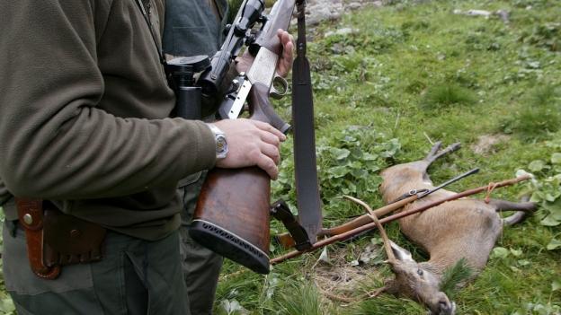 Ein Drittel der Hirsche im Kanton Luzern müssen erlegt werden