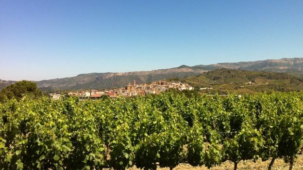 Reben in der Weinbauregion Priorat.