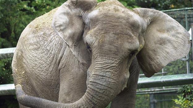 Die Elefanten im Zoo Basel sollen gesund und beschäftigt sein.