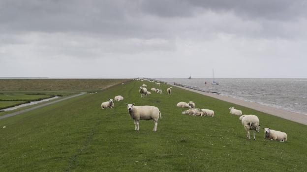Holländischer Deich.