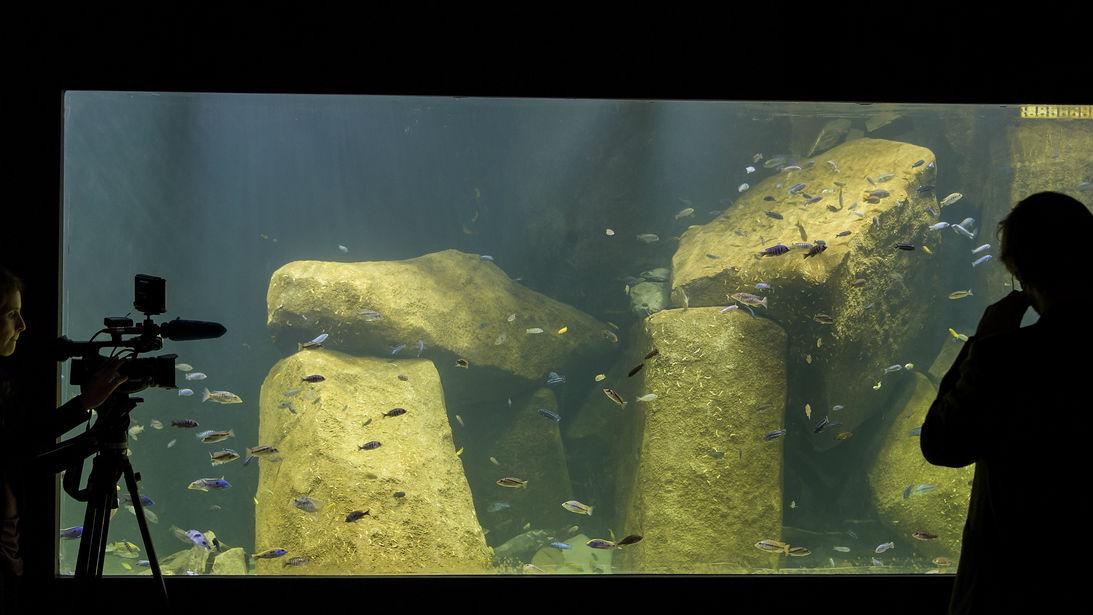 europas gr sstes s sswasser aquarium die woche in tessin und romandie srf. Black Bedroom Furniture Sets. Home Design Ideas