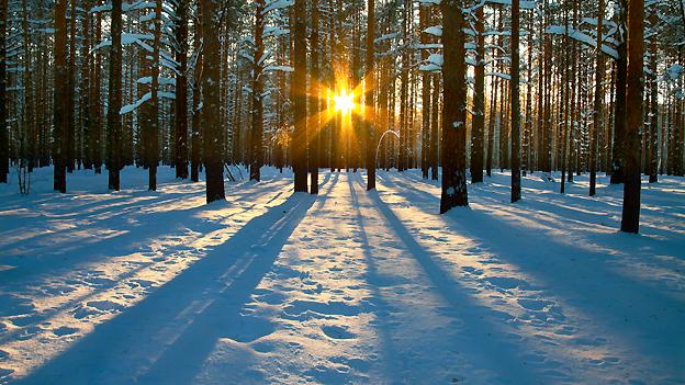 Seelennahrung: Ein Spaziergang in einem verträumten Winterwald.