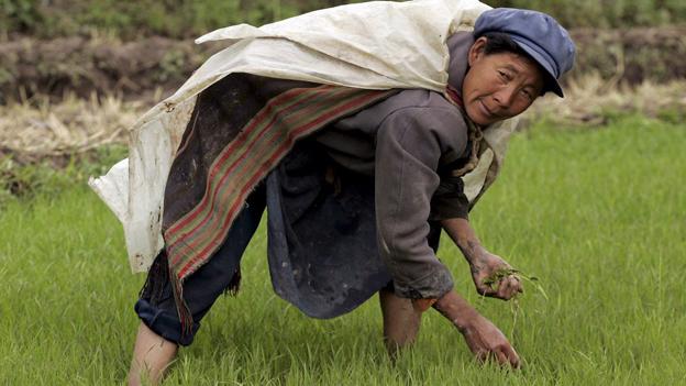 Chinesischer Bauer auf Reisfeld.