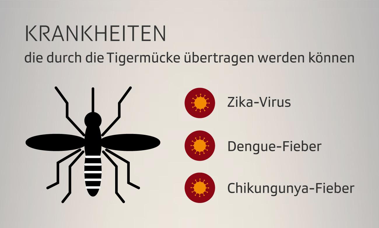 Krankheiten, die von der Tigermücke übertragen werden können