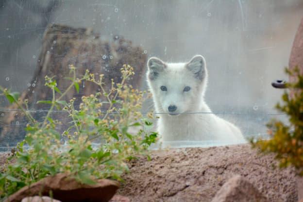 Zur Detailseite von Seehund, Puma & Co.