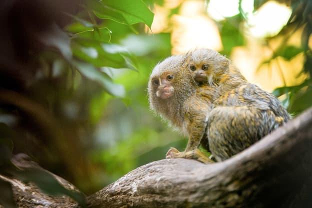 Zur Detailseite von Zoo und so - Tierisch wild!