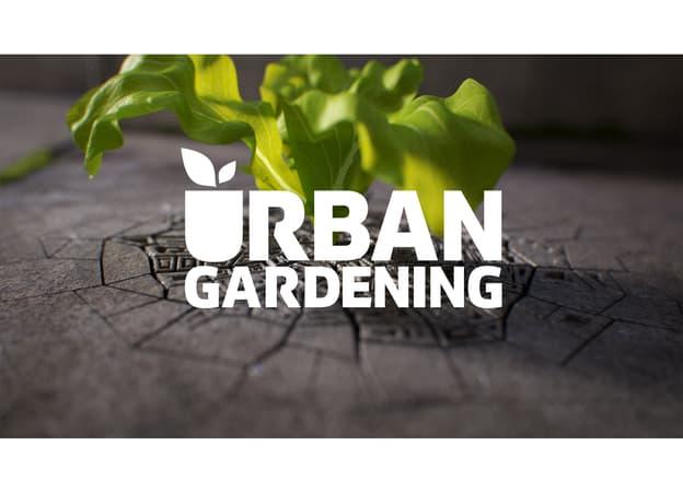 Zur Detailseite von Urban Gardening I