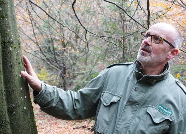 Zur Detailseite von Der Baumflüsterer