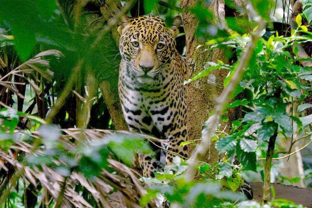 Zur Detailseite von Costa Rica - Der Natur zur Seite stehen