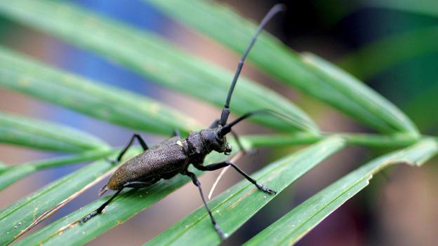 Insekten zählen im Regenwald