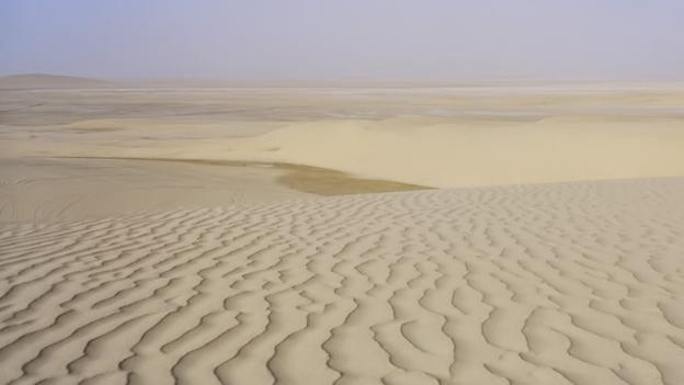 Wie die Wüste urbar werden soll