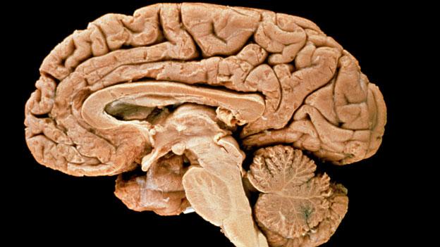 Die Geheimnisse des Gehirns entschlüsseln