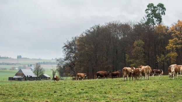 Berner Bauern uneins über Gewerbegrenze