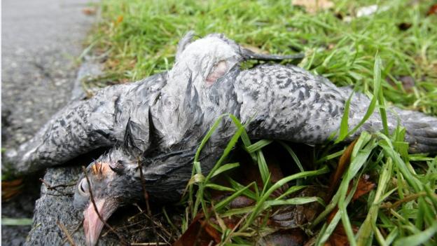 Erster Vogelgrippenfall im Baselbiet