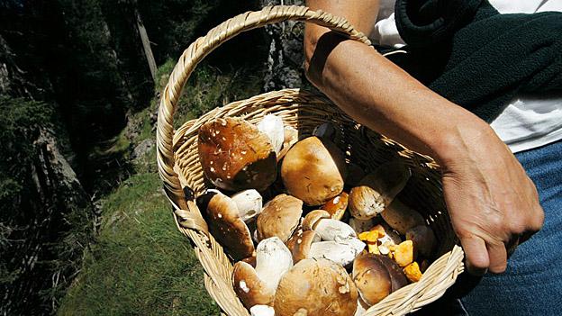 Zu kalt für Pilze