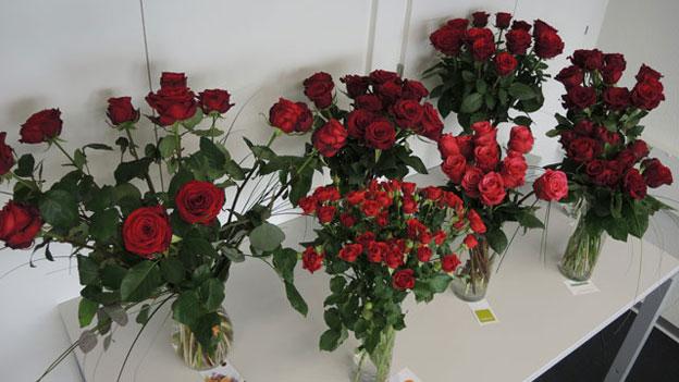 Diese Rosen lassen den Kopf nicht hängen