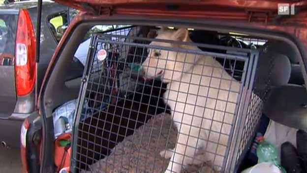 Auto-Hundeboxen im Test