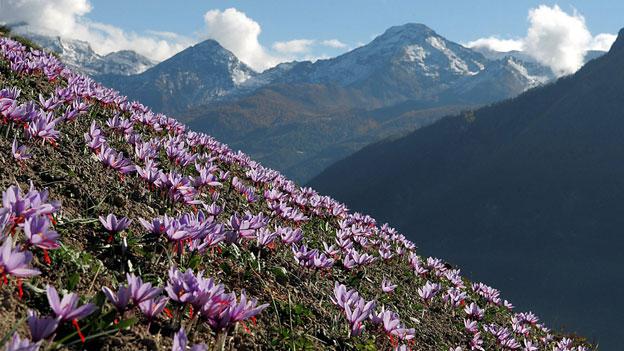 Das Gold aus den Walliser Bergen ist kein grosses Geschäft