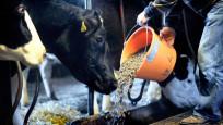 Audio «Weniger Kraftfutter und Antibiotika für Milchkühe» abspielen