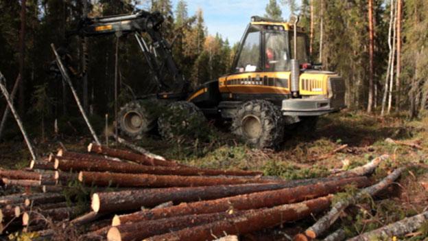 Kein Umweltlabel mehr für IKEA-Holz aus Karelien