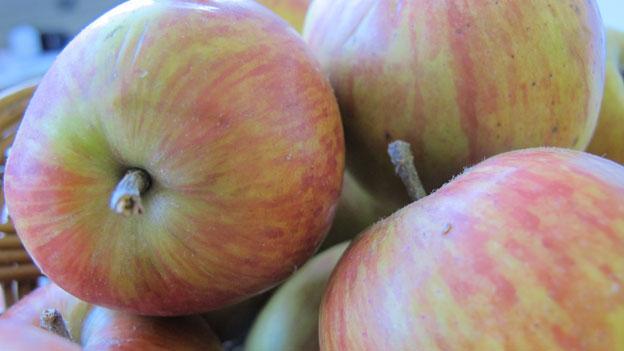 Alte Apfelsorte im Kampf gegen Feuerbrand