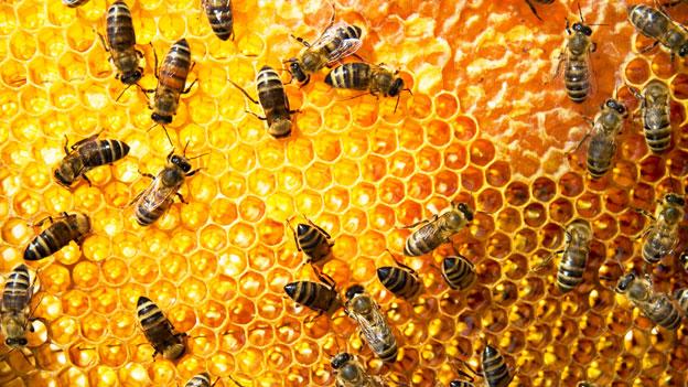 Mässige Schweizer Honigernte