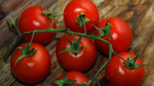 Die Tomate – der Sommer auf dem Teller
