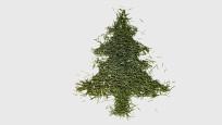 Audio «Den Tannenbaum richtig entsorgen» abspielen