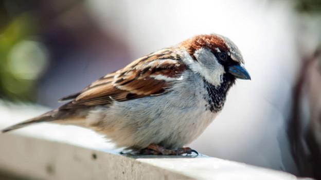 Audio «Rechtsfrage: Dürfen Vermieter verbieten, Vögel zu füttern?» abspielen