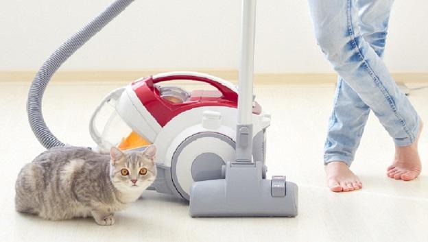 Katzensand kann Ihren Staubsauger gefährden