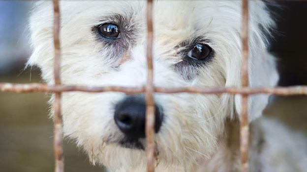 Audio ««Illegal importierte Hunde sind nicht günstiger»» abspielen